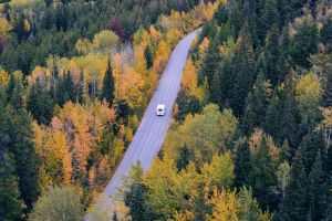 white car traveling near trees during daytime